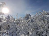 Soleil et arbres givrés du haut du téleski des Savagnières.jpg